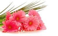 Съедобная картинка Букет цветов № 01269, лист А4. Вафельная/сахарная картинка.